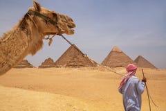 CAIRO, EGYPT - MAY 22, 2017: Arab man driving camel at Giza pyramid complex. In Cairo stock images