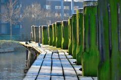 Cais congelado da madeira no inverno Fotografia de Stock Royalty Free