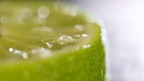 Cais cortados com gotas da água Tiro macro Gotas da água em um fim do citrino acima Tiro macro de um citrino Suculento verde filme