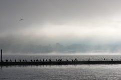 Cais da doca com gaivotas Imagem de Stock Royalty Free