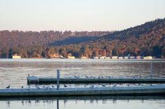 Cais da doca com gaivotas Imagem de Stock