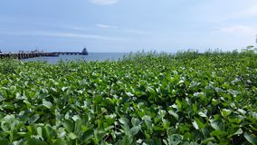 Cais da pesca de Hua Hin Imagem de Stock Royalty Free