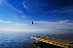 Cais de madeira da gaivota Imagens de Stock