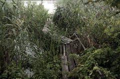 Cais de madeira esquecido entre os juncos sobre o lago Imagens de Stock