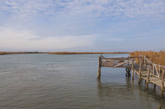 Cais de madeira no estuário do rio de Po, Itália Imagens de Stock Royalty Free