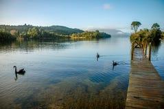Cais de madeira no lago Tarawera, Nova Zelândia norte fotos de stock