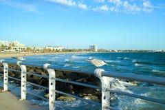 Cais do kilda do St de Austrália Melbourne das gaivotas Imagem de Stock Royalty Free