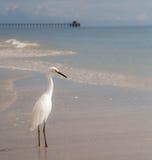 Cais do oceano com egret Imagem de Stock Royalty Free