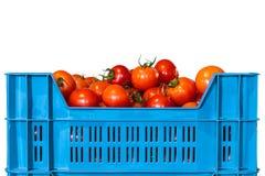 Caisse avec les tomates fraîches d'isolement sur le blanc Photographie stock