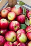 Caisse de pommes Photo libre de droits