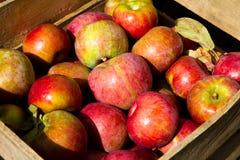 Caisse de pommes horizantal Image stock