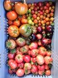 Caisse de tomates imparfaites d'héritage et d'héritage à l'farrmers Photographie stock libre de droits