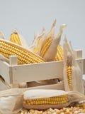 Caisse en bois avec des épis de blé Photos libres de droits