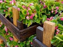 Caisses en bois avec des fleurs Photographie stock