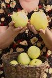Caisses en bois avec des pommes et des mains de vert jaune Image libre de droits