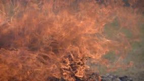 Caisses militaires en bois brûlantes des munitions La cheminée de combustion lente Le grand feu clips vidéos