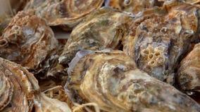 Caixa com as ostras fechados frescas vídeos de arquivo