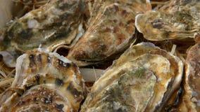 Caixa com as ostras fechados frescas filme