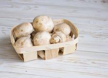 Caixa com cogumelo Imagens de Stock