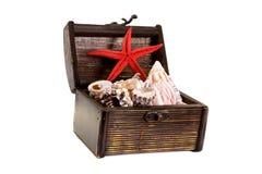 Caixa com escudos do mar fotografia de stock royalty free