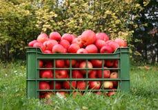 Caixa com maçãs Foto de Stock Royalty Free