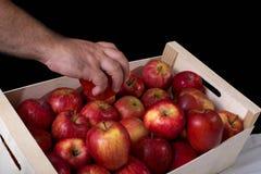 Caixa com maçãs vermelhas Foto de Stock