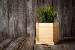 A caixa com a planta Fotos de Stock Royalty Free