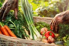 Caixa com vegetais orgânicos Imagens de Stock Royalty Free