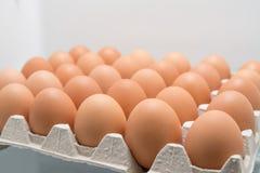 Caixa completa dos ovos em um refrigerador Fotografia de Stock Royalty Free