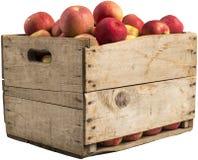 Caixa completamente de maçãs Fotografia de Stock Royalty Free
