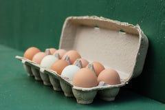 Caixa completamente de ovos frescos da exploração agrícola Fotografia de Stock