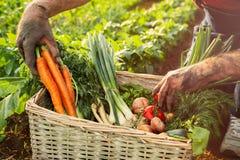 Caixa completamente de vegetais Fotos de Stock Royalty Free