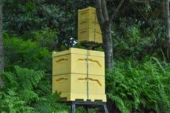 Caixa da abelha Imagens de Stock Royalty Free