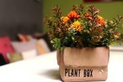 Caixa da planta Imagem de Stock Royalty Free