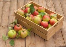 Caixa das maçãs na tabela de madeira Fotos de Stock Royalty Free