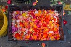 Caixa das pétalas cor-de-rosa coloridas, mercado de Paloquemao, Bogotá, Colômbia imagens de stock royalty free