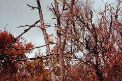 Caixa de aninhamento abandonada nas árvores de floresta na queda na floresta com as folhas vermelhas e amarelas brilhantes imagem de stock royalty free