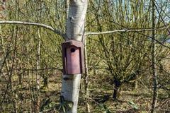 Caixa de assentamento do pássaro unida a um tronco de árvore visto na mola adiantada - 2 foto de stock royalty free
