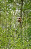 Caixa de assentamento para pássaros selvagens Fotos de Stock Royalty Free