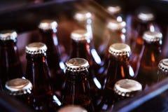 Caixa de cerveja recentemente engarrafada Fotografia de Stock