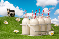 Caixa de frascos de leite Foto de Stock