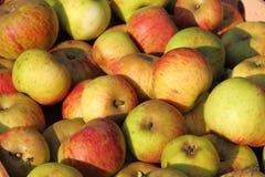 Caixa de maçãs Fotografia de Stock