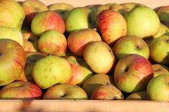 Caixa de maçãs Imagem de Stock Royalty Free
