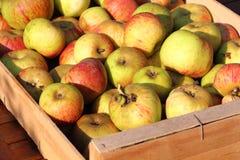 Caixa de maçãs Imagens de Stock Royalty Free