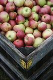 Caixa de maçãs frescas após a chuva Foto de Stock Royalty Free