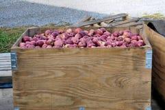 Caixa de maçãs vermelhas Imagem de Stock Royalty Free