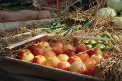 Caixa de maçãs vermelhas na fruta e no indicador de Veg Fotos de Stock Royalty Free