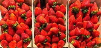 Caixa de madeira colhida fresca da morango perfeita orgânica vermelha madura Foto de Stock Royalty Free