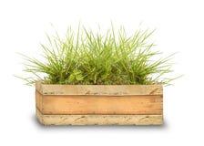 Caixa de madeira com grama verde Imagem de Stock
