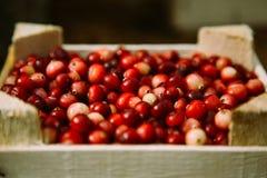 Caixa de madeira com o arando vermelho bonito Imagens de Stock
